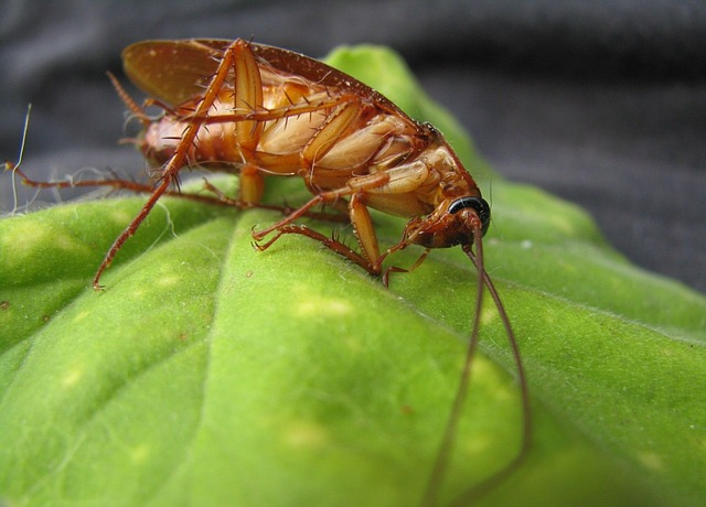 cockroach-89067_640
