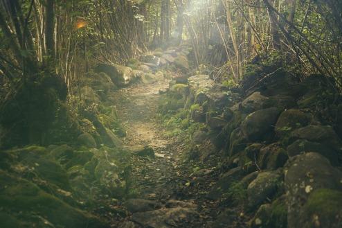 forest-438432_1280.jpg