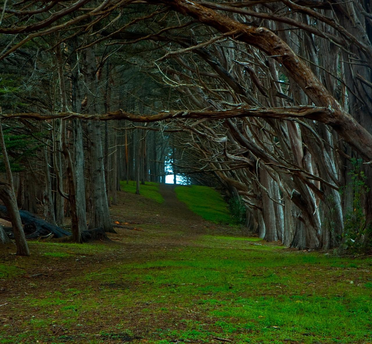 forest-696838_1280.jpg