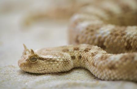 snake-208585_1280.jpg