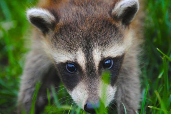 animal-690159_1280.jpg