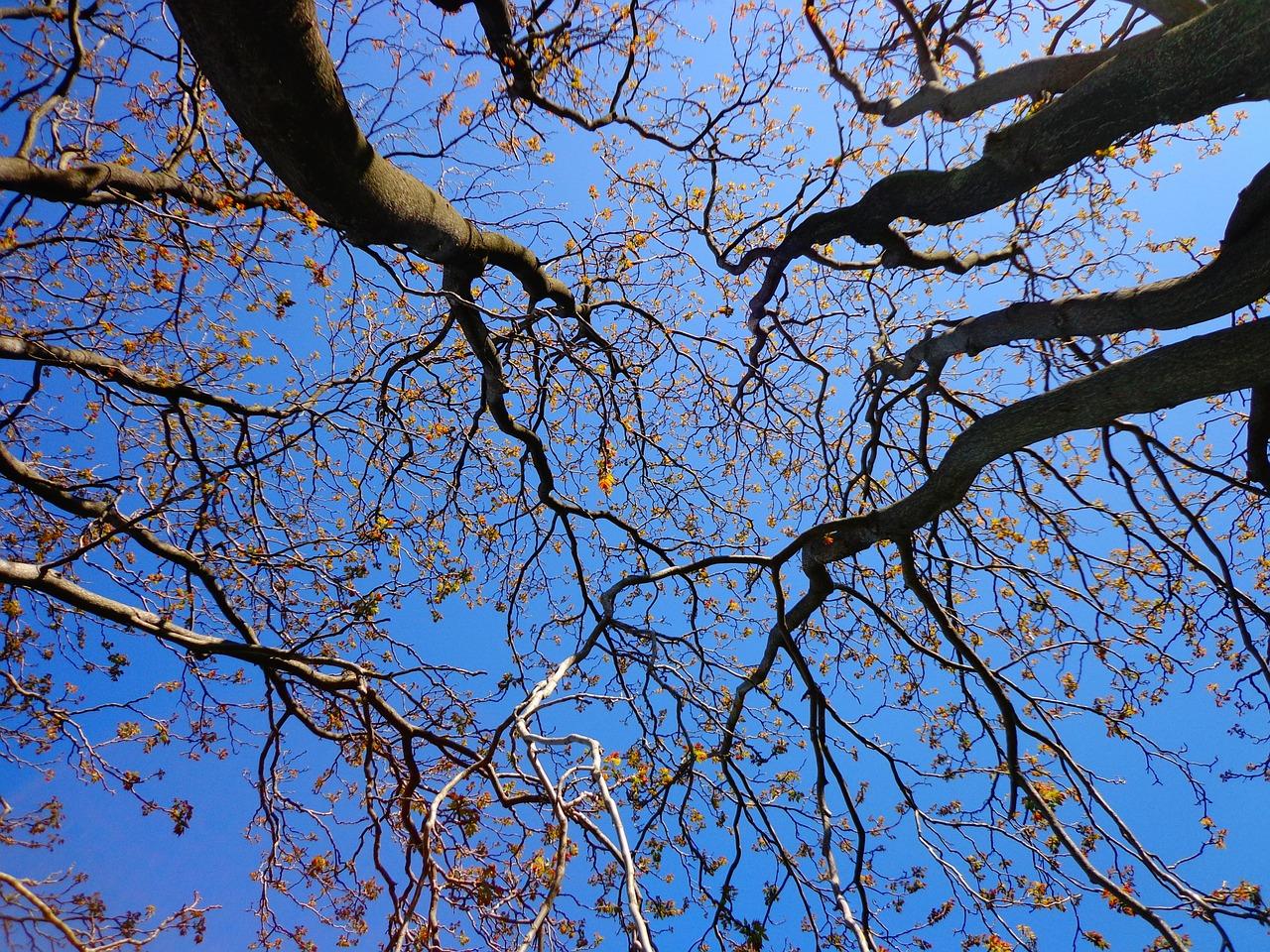 tree-439171_1280.jpg