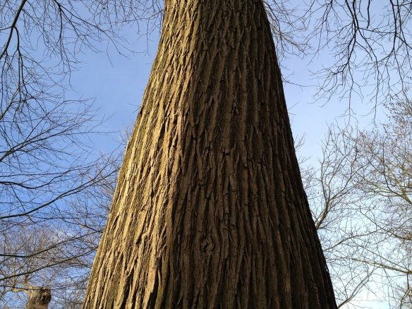 trees-265912_1280.jpg