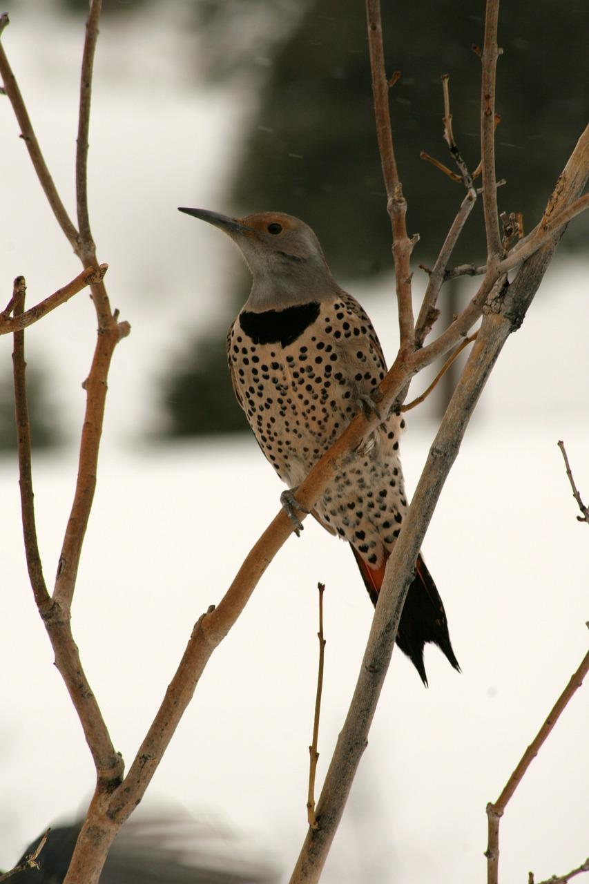woodpecker-189657_1280