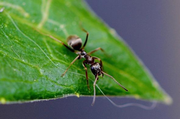 ant-771071_1280