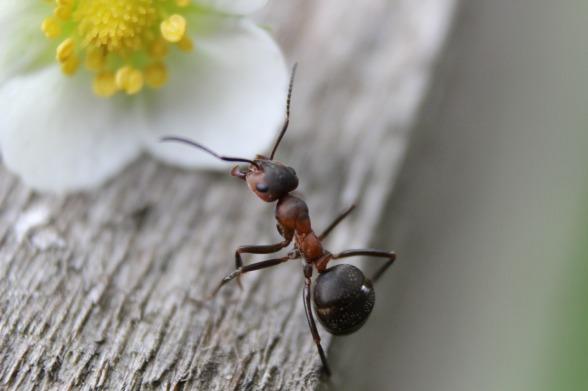 ant-954015_1280