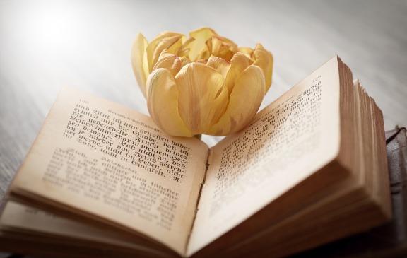 book-1325088_1280