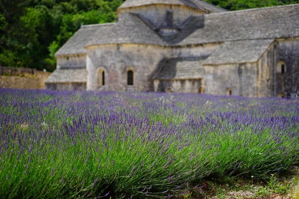 lavender-1275377_1280