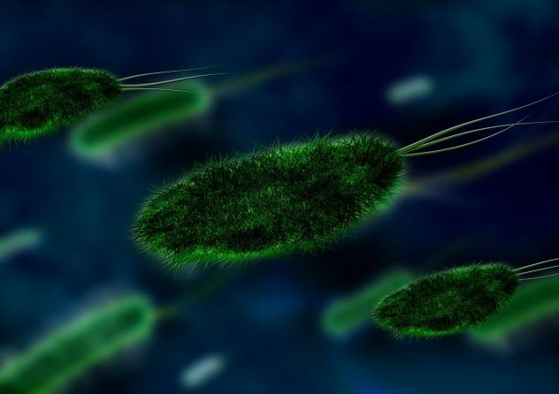 bacteria-106583_1280