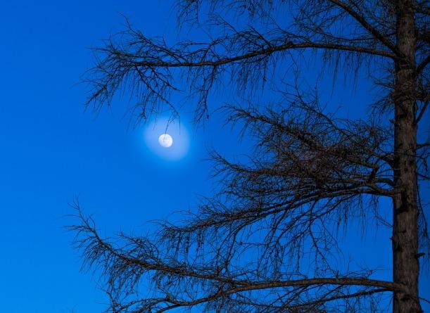 moon-1275694_1280