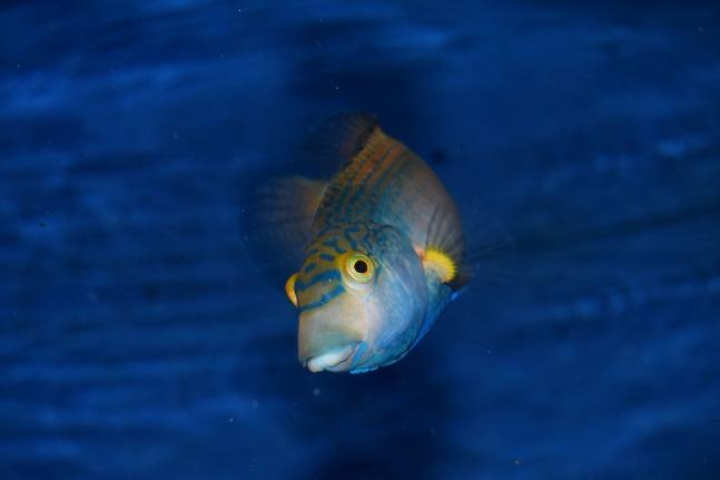 fish-1918684_1280
