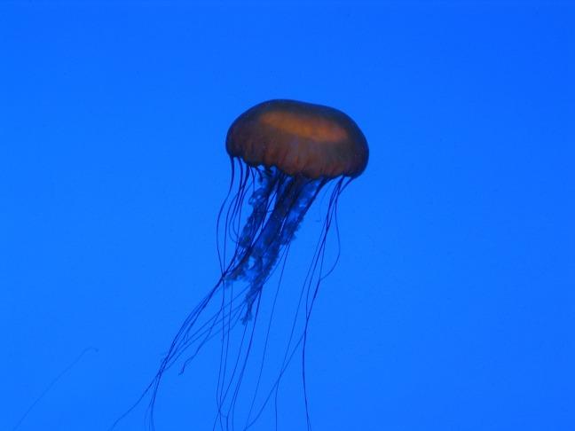 jellyfish-1185278_1280
