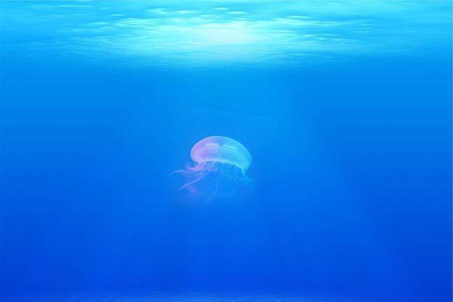 jellyfish-698521_1280