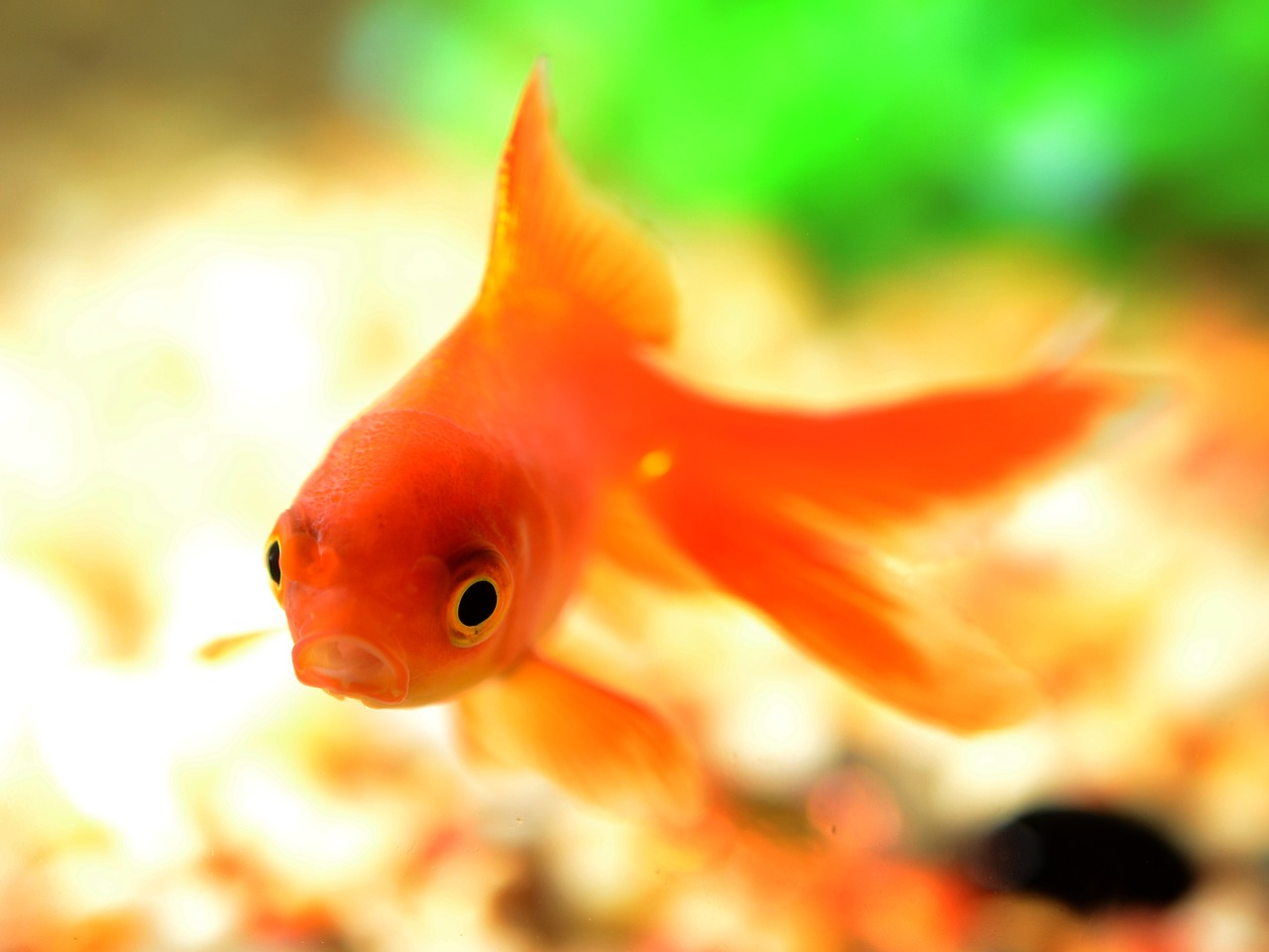 fish-881161_1280.jpg