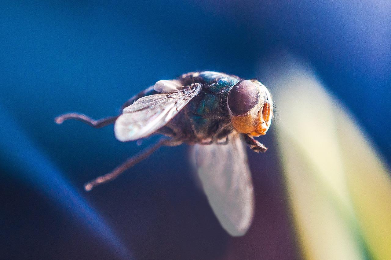 fly-1910610_1280