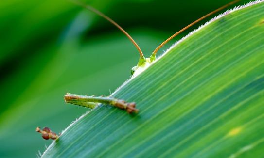 grasshopper-193721_1280