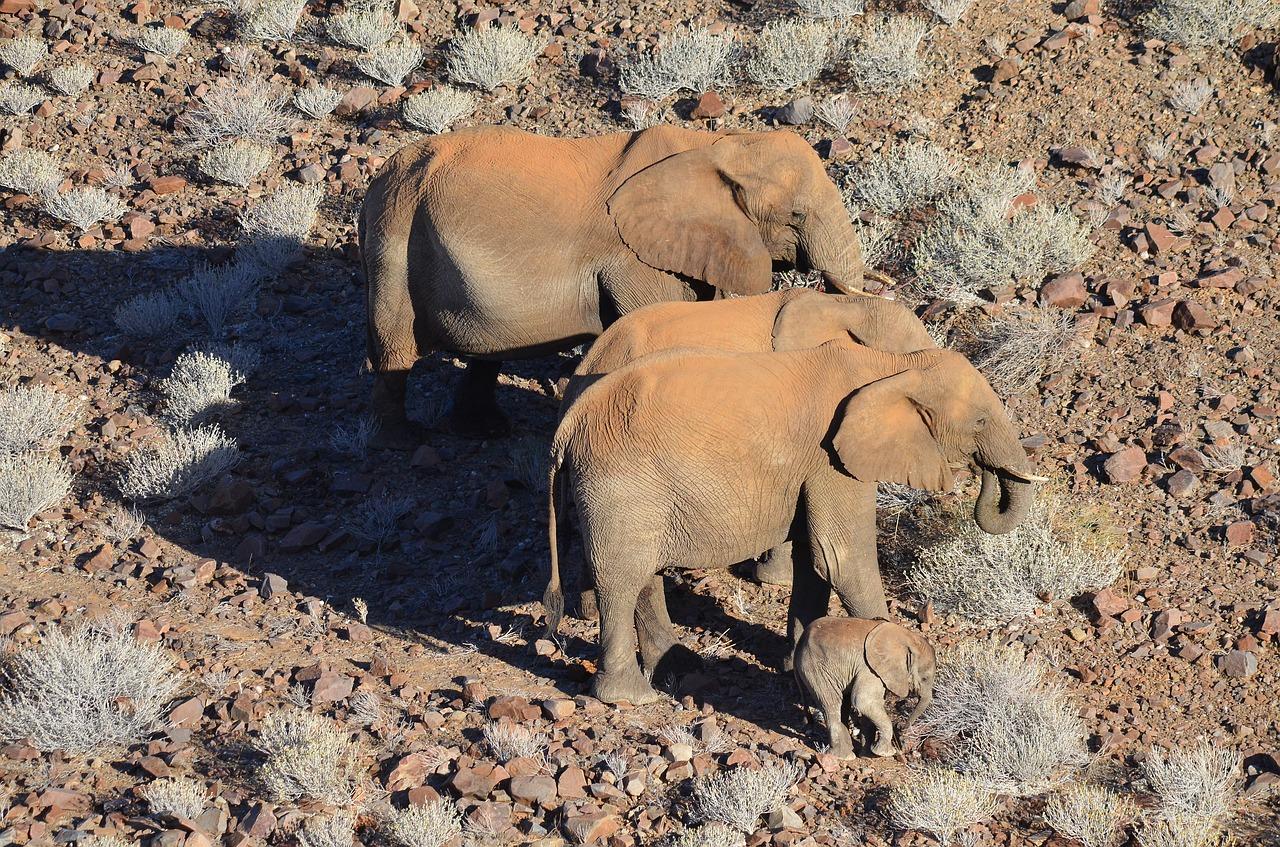 elephant-2452738_1280