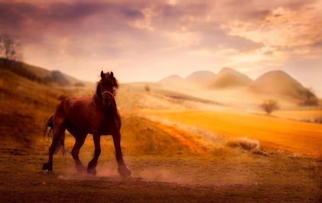 horse-2613932_1280