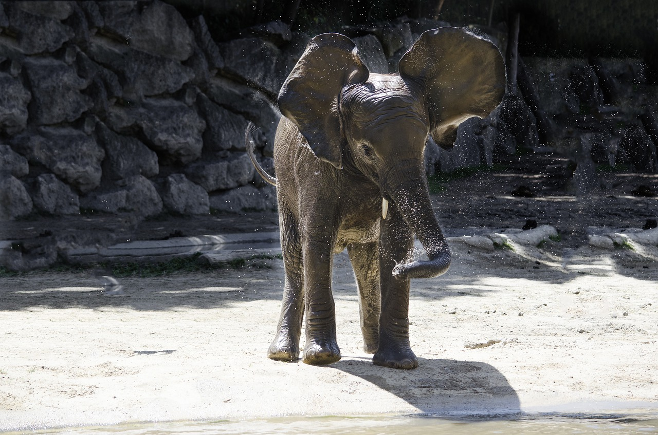 elephant-3060526_1280