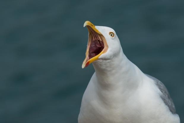 gull-2166711_1280