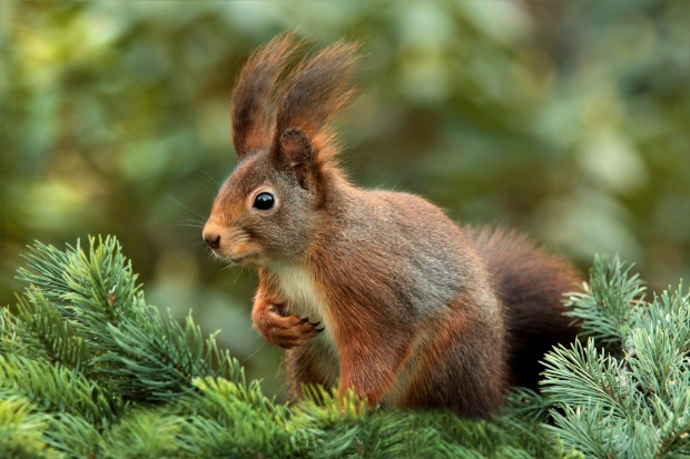 squirrel-619968_1280