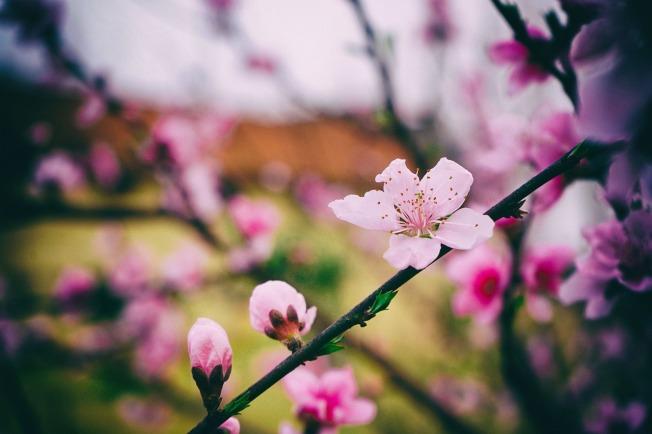 flower-3268817_1280