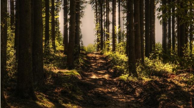 trees-3410846_1280