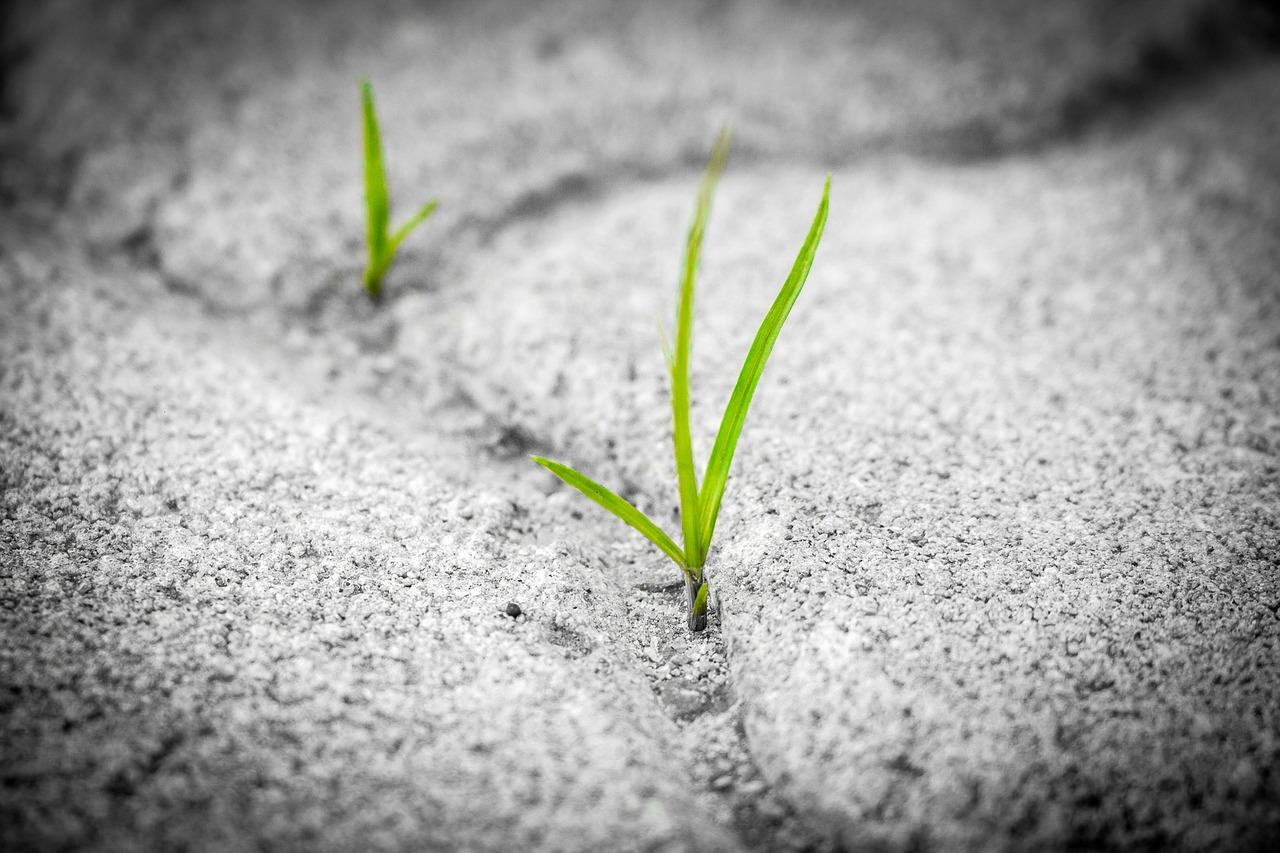 grass-1913167_1280