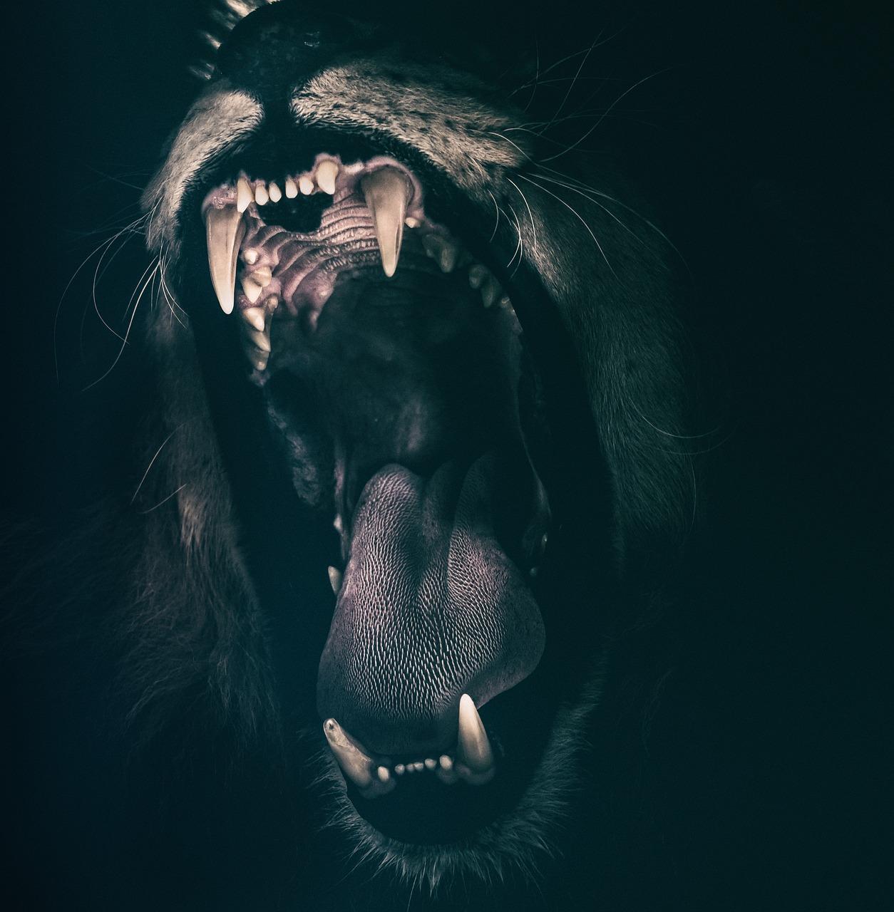 lion-2885618_1280
