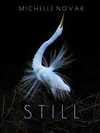Still by Michelle Novak