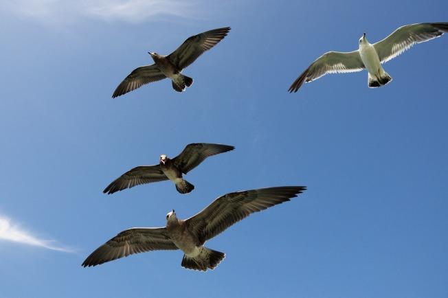 seagulls-1209919_1280