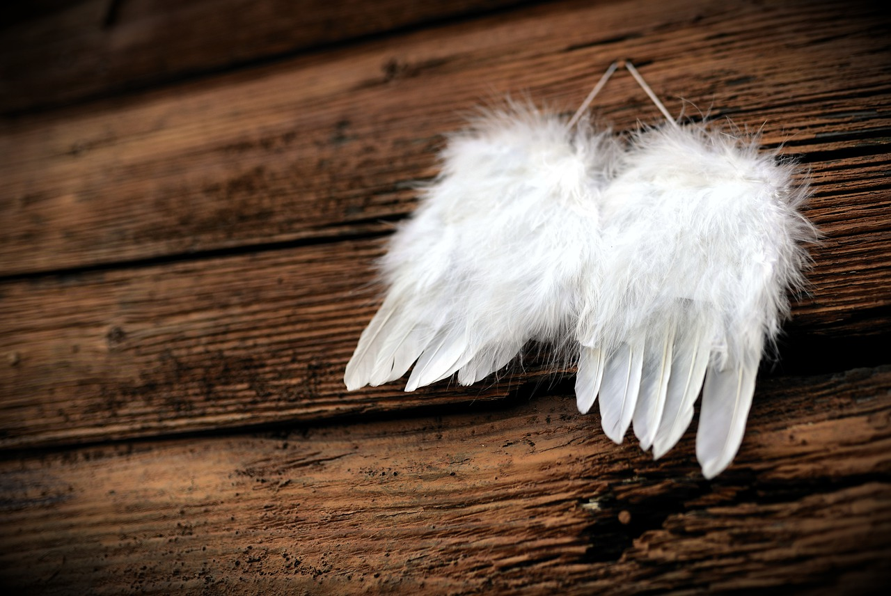 feather-4661244_1280