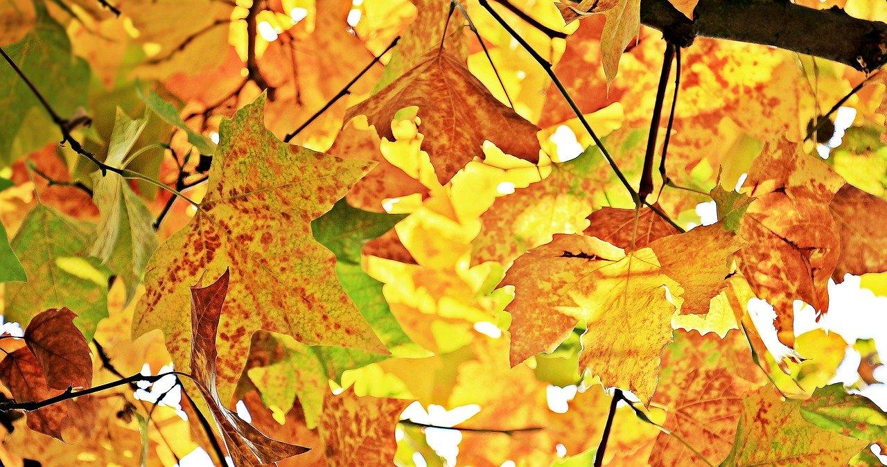 autumn-1655915_1280