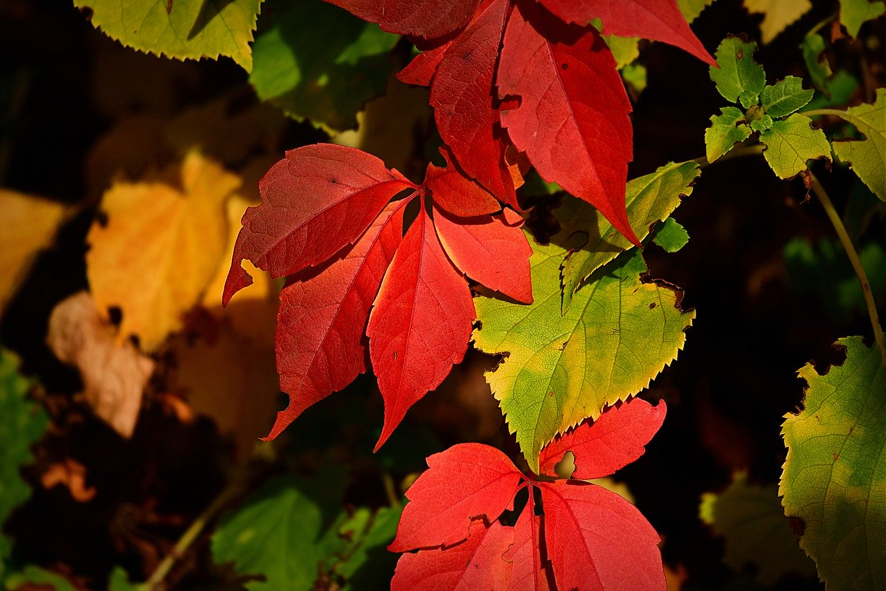 autumn-leaf-3734004_1280