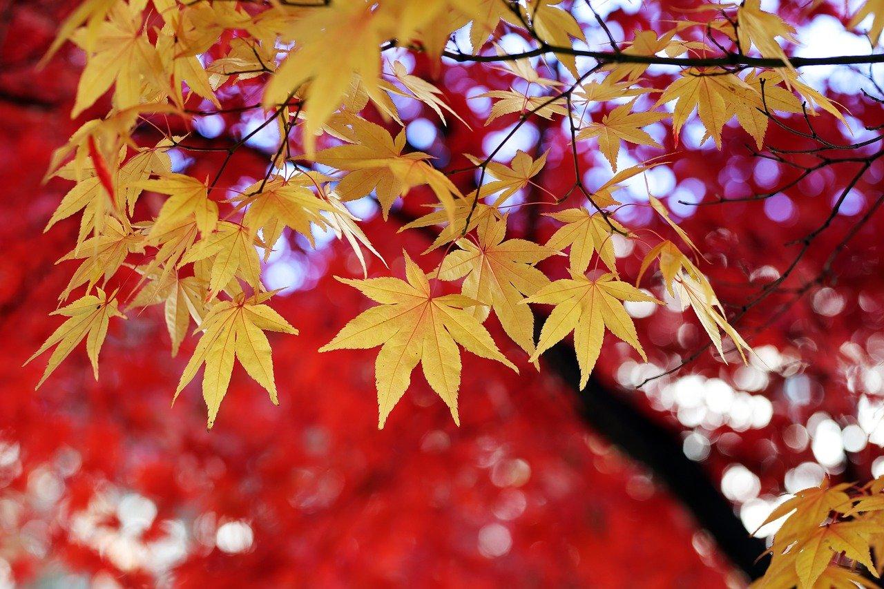 leaves-4615459_1280